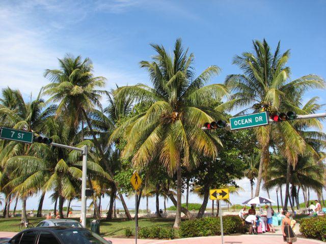 Arbres de Miami 2