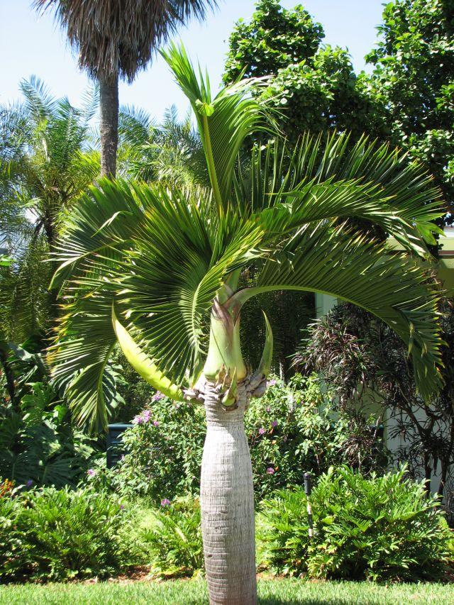 Jardin botanique  de Miami (c) SB