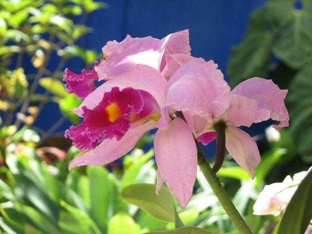 Orchidée (c) SB