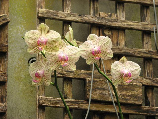 Orchidées 3