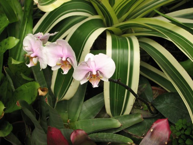 Orchidées 2