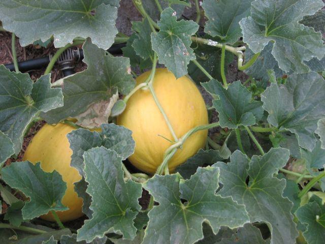 Légumes (c) SB