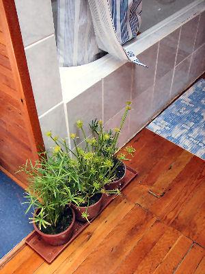 Une plante de Salle de bains (c) SB