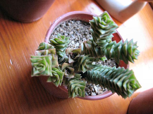 Succulentes (c) SB class=
