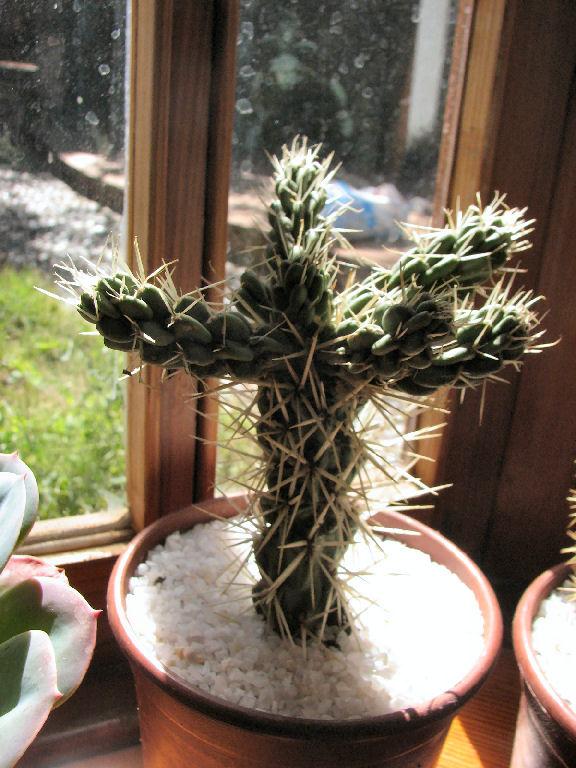 Cactus (c) SB