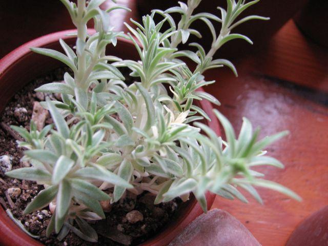 Plantes grasses (c) SB