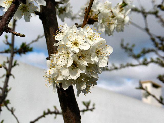 printemps (c) SB