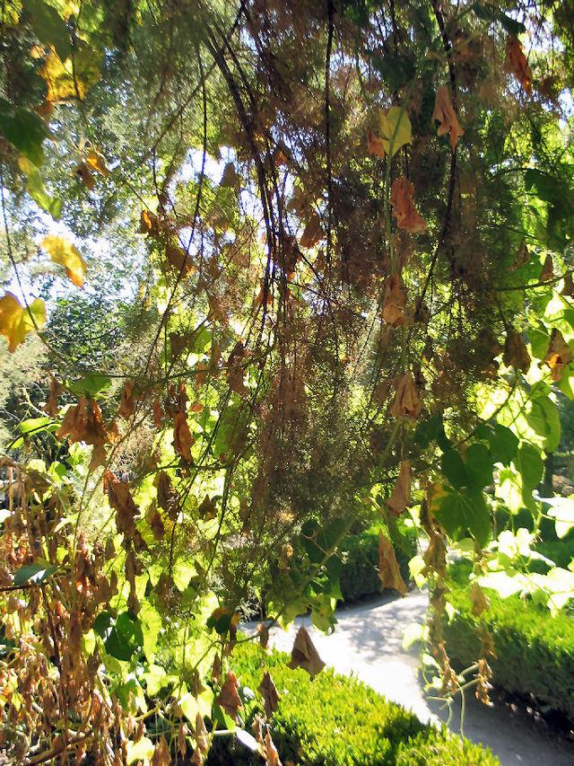 Jardim_botanico_8