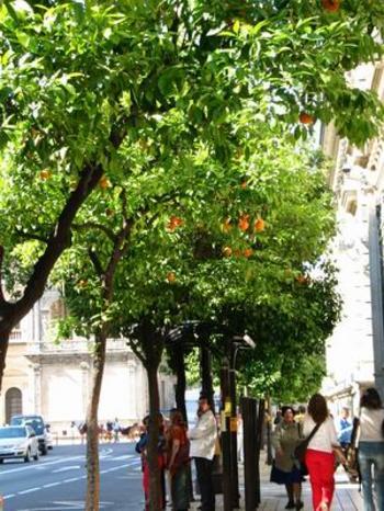Orangers (c) SB